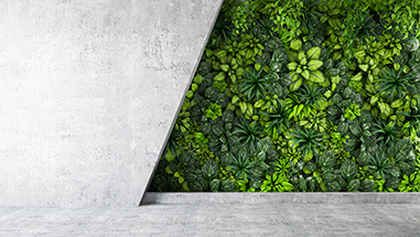 concrete_wall_half_plants.jpg